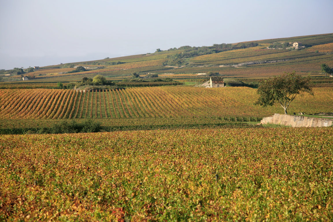 Vineyards & Wine-growing